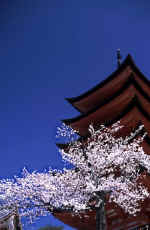 Pagoda with cherry blossom.jpg (57215 bytes)